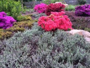 Jezírka, Travní koberce, Zahrady - jplcz.com - Servis a údržba zahrad