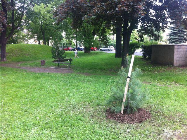 Veřejná zeleň - jplcz.com - Výsadba stromů a keřů
