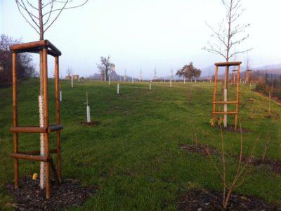Zahrady - jplcz.com - Realizace BIO sadu, výsadba stromů a keřů