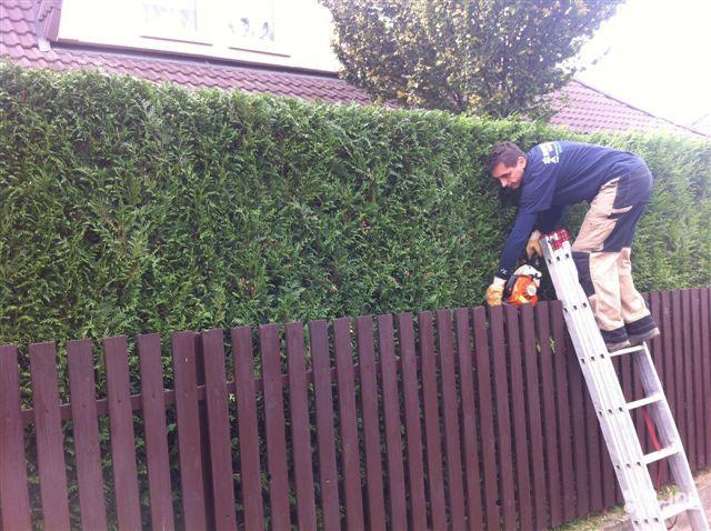 Travní koberce, Zahrady - jplcz.com - Hnojení trávníků podzimním hnojivem, osázení živých plotů, strojní tlakové čištění chodníků, údržba trvalek