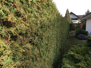 Údržba zahrady Praha - jplcz.com - střihání živých plotů