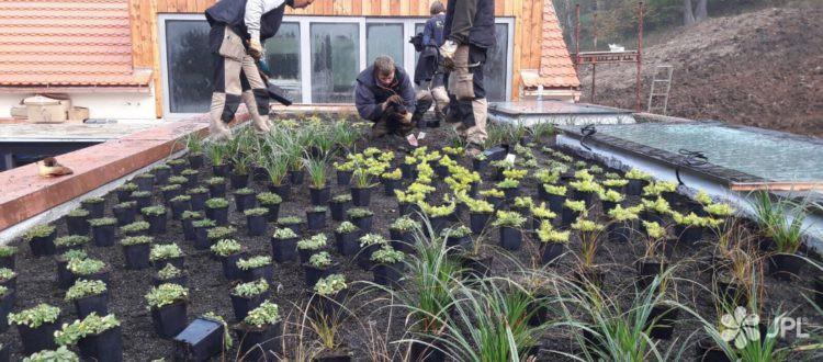 Zelená střecha Litoměřice
