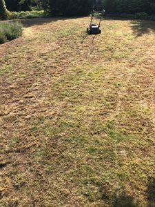 Regenerace trávníku Čížkovice
