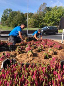 Výsadba rostlin okružní křižovatka Lovosice