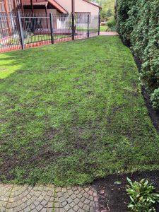 Regenerace trávníku 200m2 Boreč