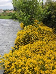 Údržba zahrad květen 2020